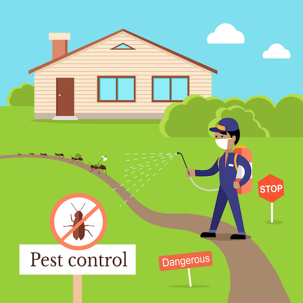 Pest control: What to do before and after (checklist included)