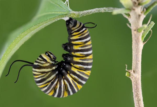 Will Insecticidal Soap Kill Caterpillars